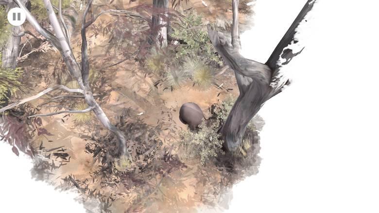 «Paperbark» – один насыщенный день из жизни вомбата